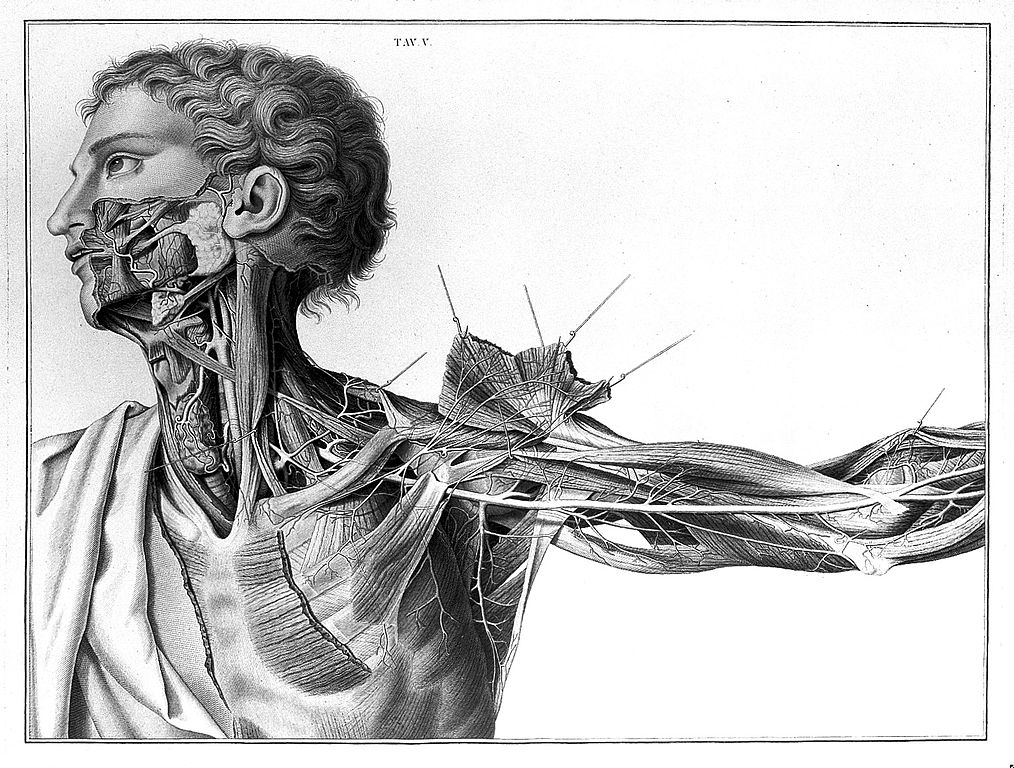 """A. Scarpa, """"Sull' aneurisma"""", 1804"""